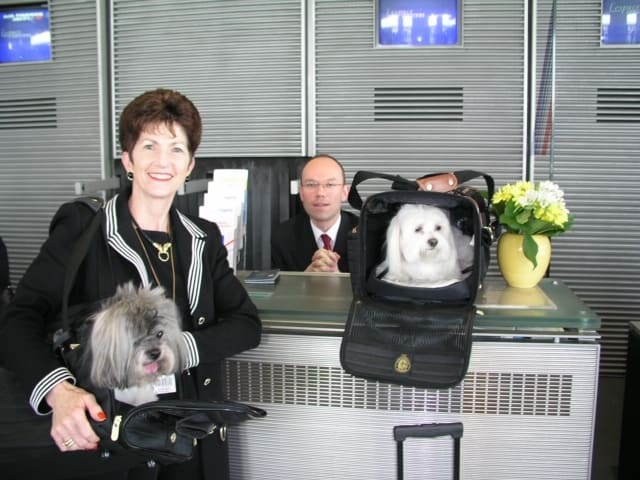 SHERPA & SuNae always loved working on safe pet travel. Getting ready to go to NYC on Air France. Remember one pet per person.