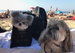 Kimba and Kartu sunning it up in Biarritz