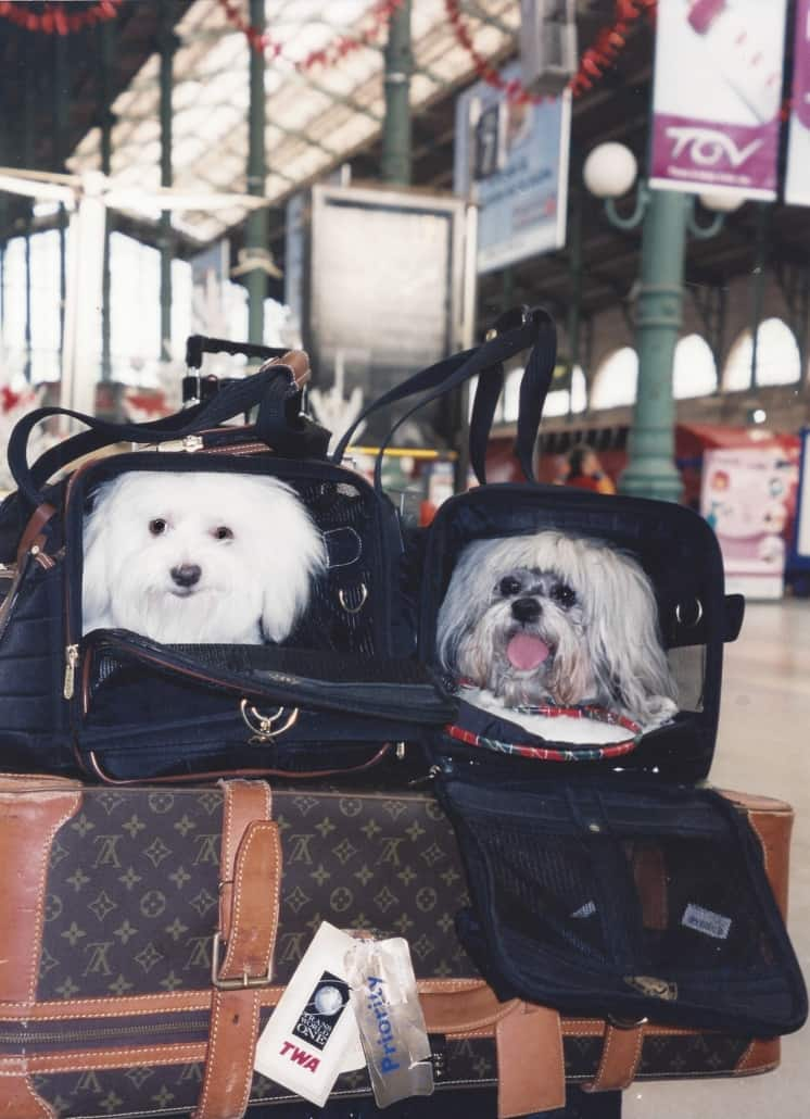 SHERPA and SuNae at the Train Station