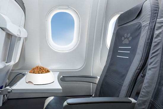some pet friendly airlines