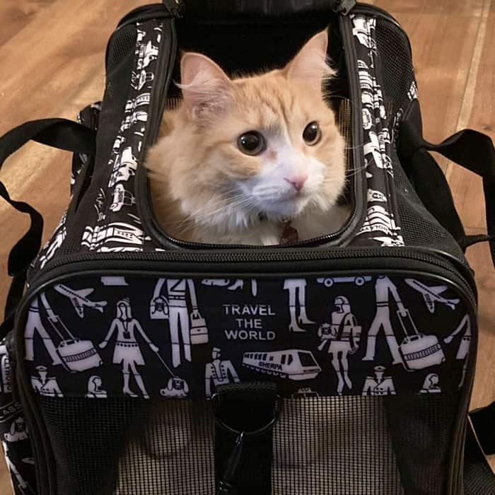Duchess the cat in a SHERPA bag