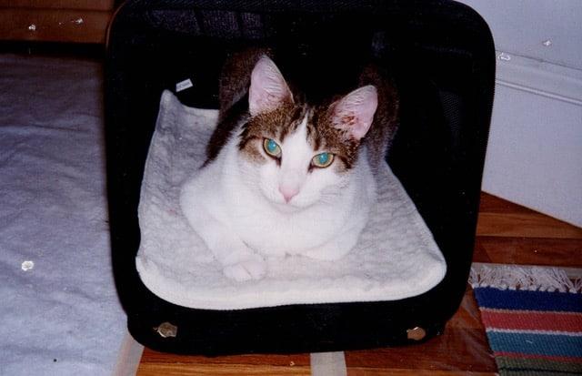 Rudy the cat in a SHERPA bag
