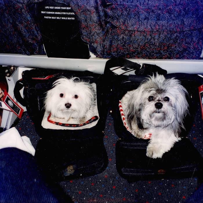 SHERPA and SuNae in first class